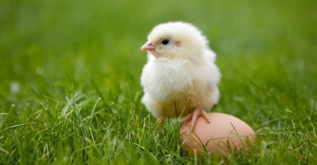 Which Came First in Real Estate - The Chicken, or the Egg