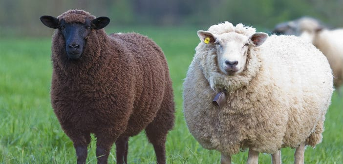 3 Ways To Be The Black Sheep Of Real Estate Investing Not Follow The Herd To Slaughter