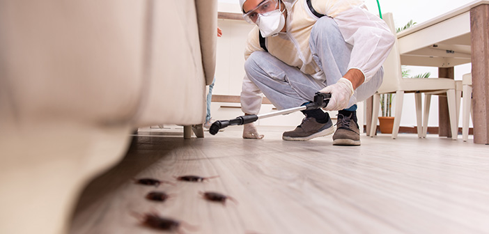 Pest control contractor exterminating roaches in bathroom