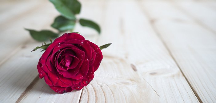 One red rose on wood background for love concept, Valentines day