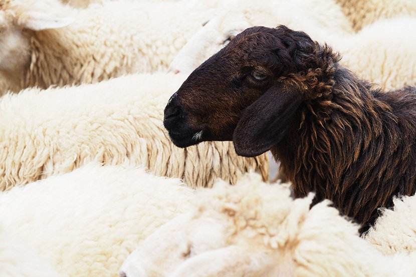 "3 Ways to Be the ""Black Sheep"" of Real Estate Investing (& Not Follow the Herd to Slaughter)"