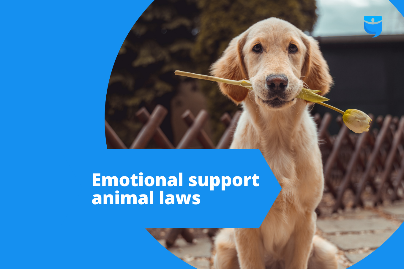 Do Landlords Have to Allow Emotional Support Animals? Know the Laws
